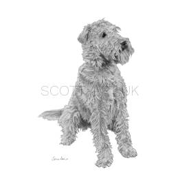 "Irish Terrier - ""Ted"" A4 Print"