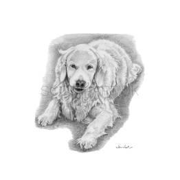 "Golden Labrador - ""Sophie"" A4 Print"