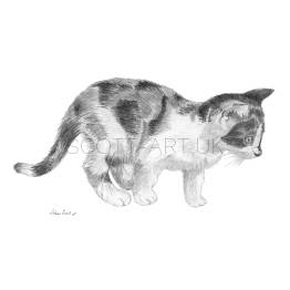 "Tortoiseshell Kitten on the Hunt - ""Mizzie"" A4 Print"