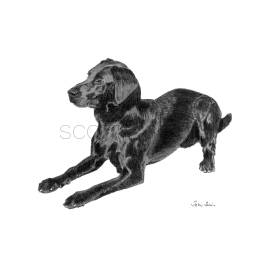 "Black Labrador - ""Jake"""
