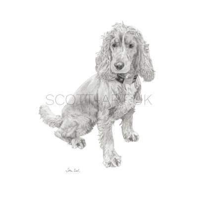 Spaniel Sitting