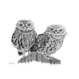 Tawney Owlets A4 Print