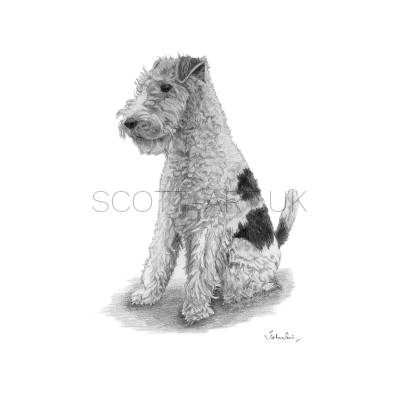 "Fox Terrier - ""Tod"""